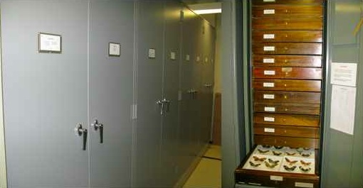 Part of the Purdue Entomology Research Collection