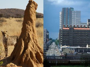 Termite mound and Eastgate Centre
