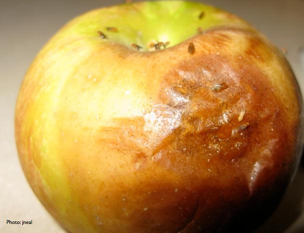 Fruit Flies Like an Apple