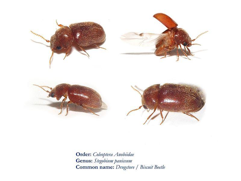 маленькие насекомые в квартире фото