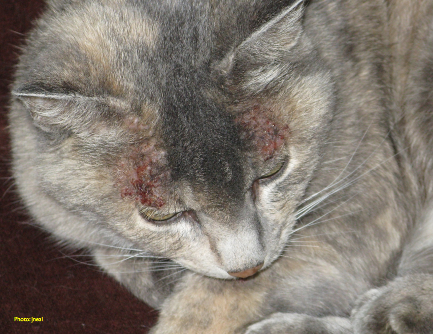 Best Treatment For Allergies To Cats