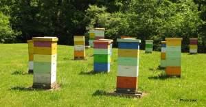 Hives boxes