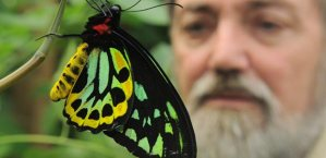 Ornithoptera priamas reared by Enthusiast, Gareth Welsh Photo: Teesside Gazette