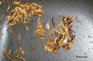 Mealworm Stir-fry