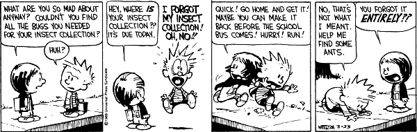 Calvin Insect Collection