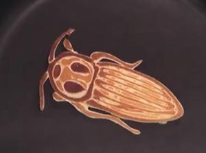 beetle pancake