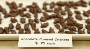 Chocolate_covered_cricket