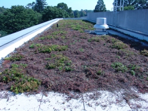 Green Roof Damage