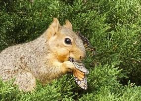 squirrel_close_up_