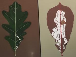 Leaf Miner Art